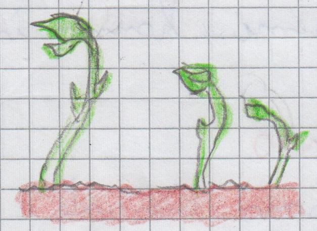 botanici 10