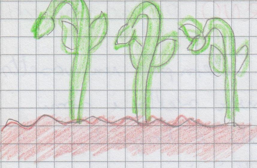 botanici 12