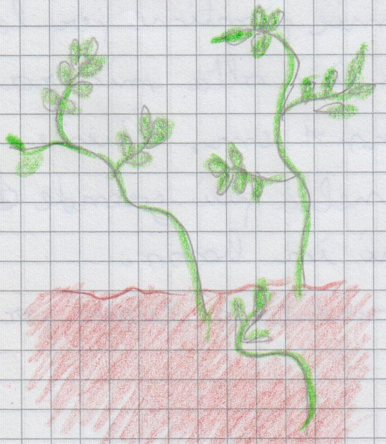 botanici 14