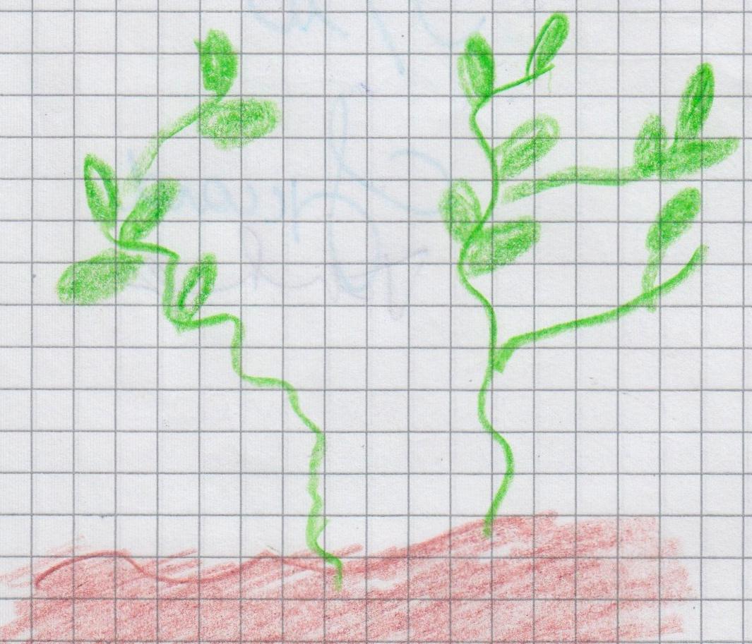 botanici 16